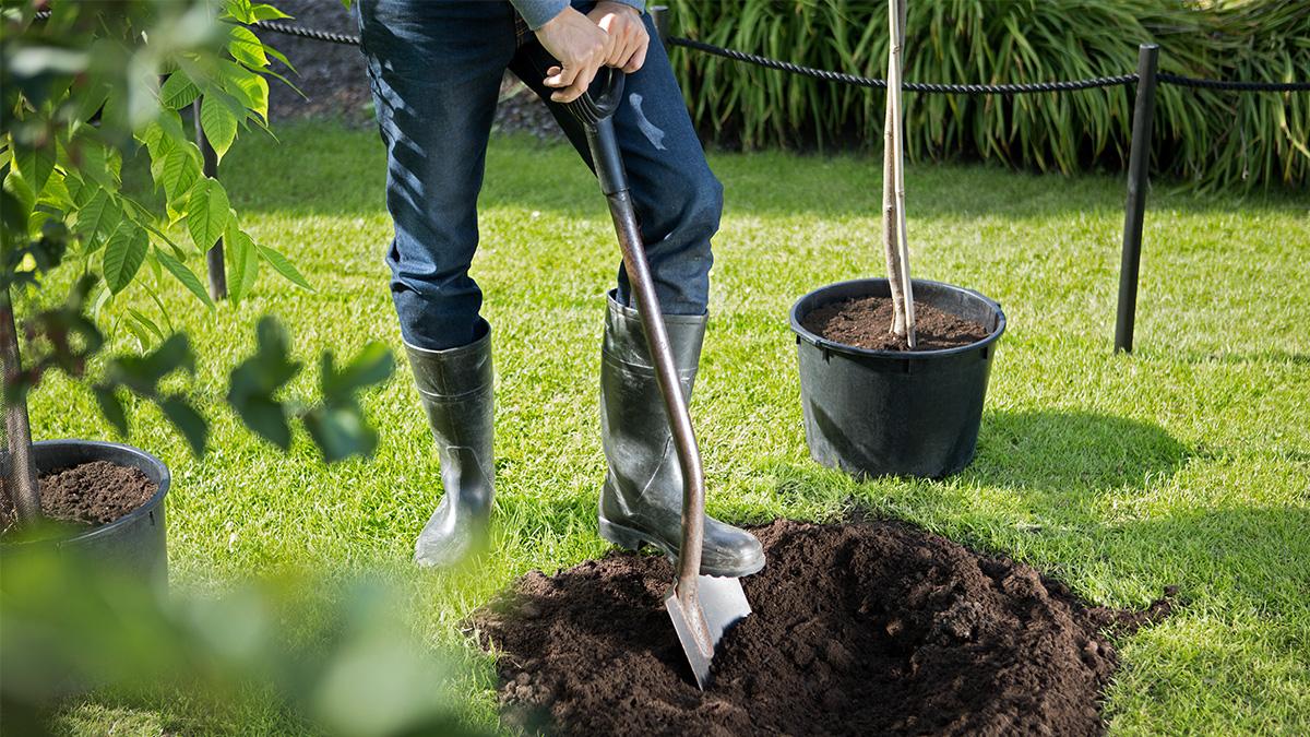 Kekkilä Puiden istuttaminen puutarhaan