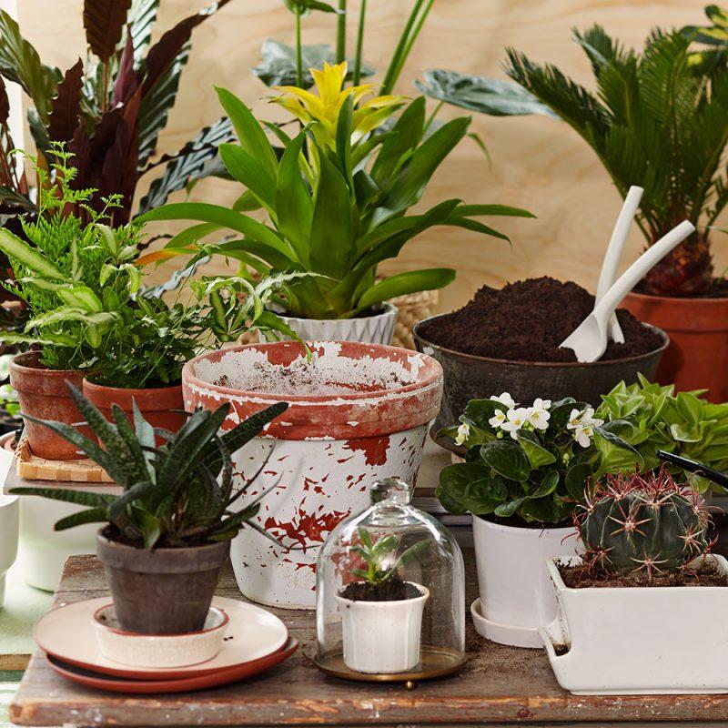 Kekkilä Kukkamulta sopii kaikille kodin viherkasveille ja ruukkukukille
