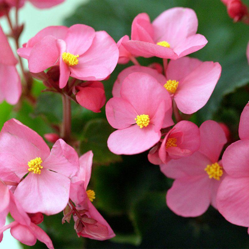 Kekkilä Kukkamulta on hyvä yleismulta kodin kukkiville kasveille