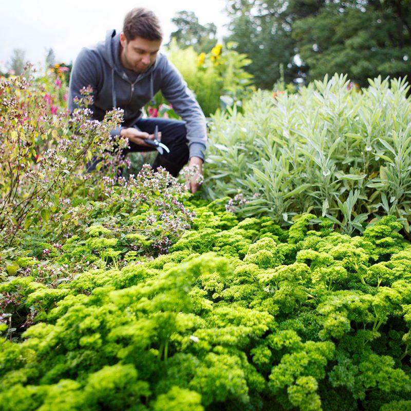 Kekkilä Puutarhamulta sopii maanparannukseen puutarhassa ja kasvimaalla