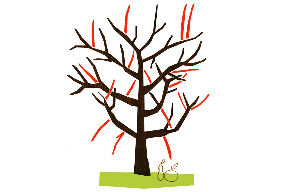 Omenapuun leikkaus vaihe 3