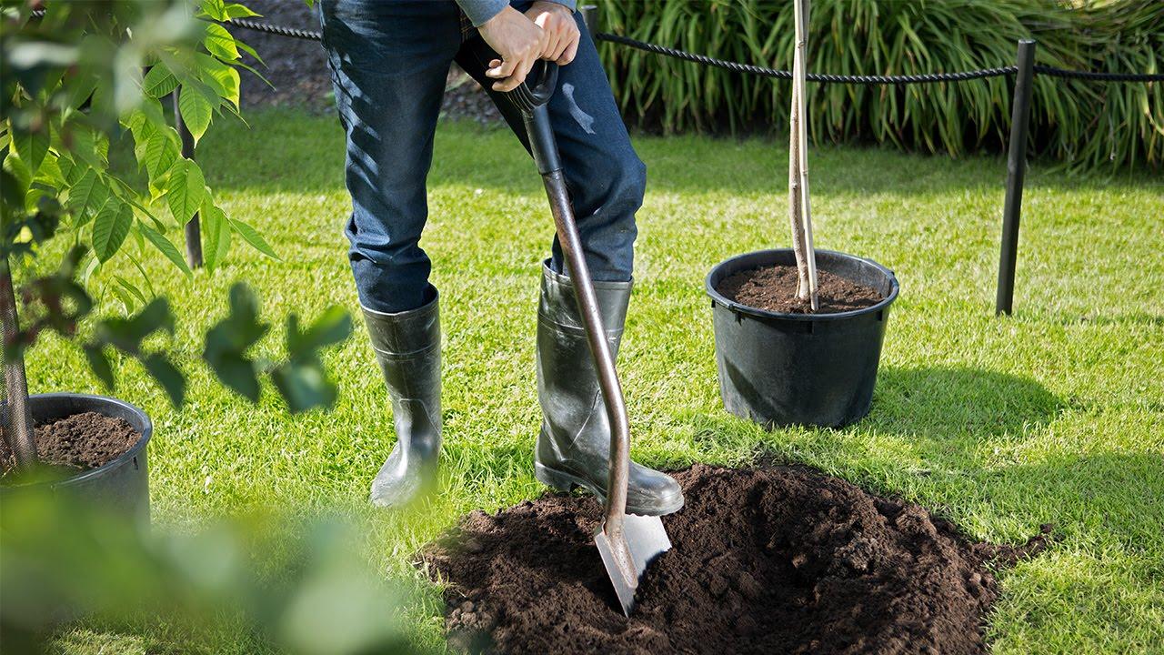 Puun istuttaminen video-ohje